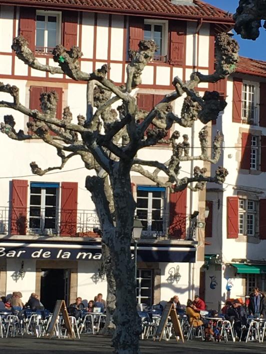squiggly tree in St Jean de Luz