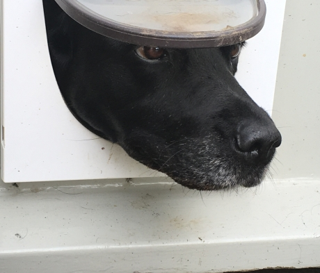 Molly's way of asking to be let in!