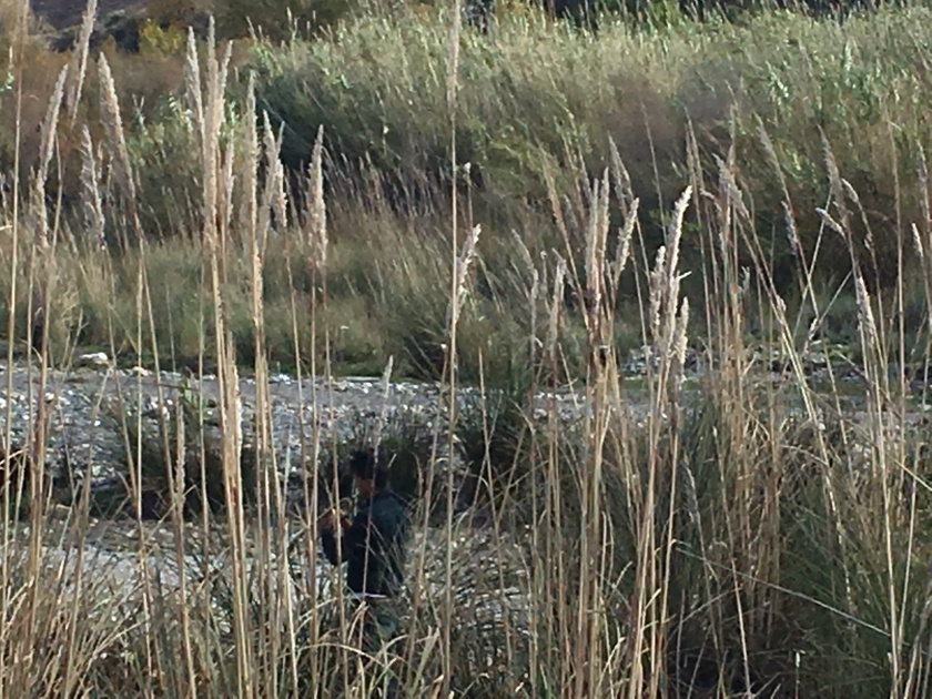 Trumpet practice amongst the reeds, Órgiva