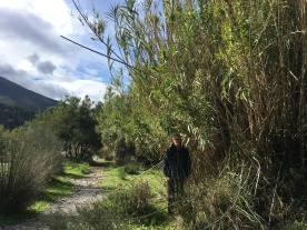 Eric standing next to tall stand of bamboo
