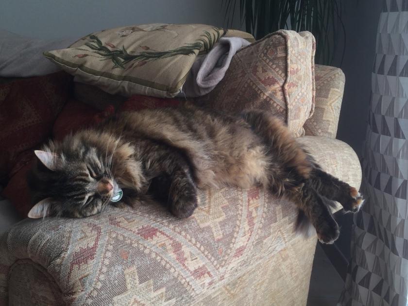 Cat, Tressan